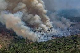 Tổng thống Brazil điều chỉnh sắc lệnh cấm đốt nương rẫy