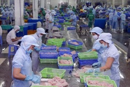 Cơ hội mới cho xuất khẩu cá tra Việt Nam - Bài 2