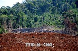 Nhiều cán bộ liên quan đến cấp Giấy chứng nhận quyền sử dụng đất rừng sai quy định