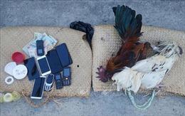 Triệt xóa tụ điểm đá gà ăn tiền hoạt động tinh vi ở Đồng Nai