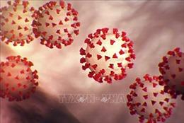 Phần mềm phân tích và dự báo đột biến gene của virus SARS-CoV-2