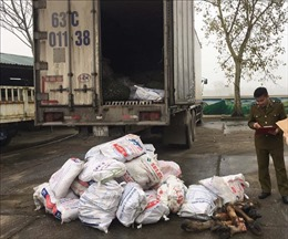 Phát hiện 1 tấn chân trâu bò đã bốc mùi hôi thối trong xe chở hàng quá trọng tải