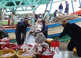 Kiên Giang quyết liệt ngăn chặn nạn khai thác thủy sản bất hợp pháp