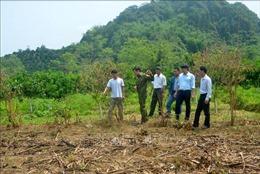 Không có việc vườn cam của người dân ở Hàm Yên bị phá hoại