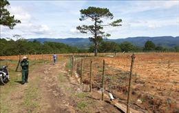Giải tỏa 'trang trại' giữa rừng thông Đà Lạt