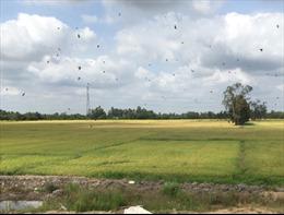 Agribank cam kết luôn đảm bảo hạn mức tín dụng cho nông nghiệp, đáp ứng vốn cho sản xuất, chế biến, tiêu thụ lúa gạo