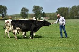 """Chọn sữa hữu cơ: Không chỉ theo """"trend"""" mà còn phải theo chuẩn"""