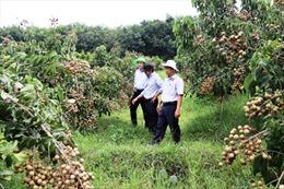 Tây Ninh chuyển đổi cơ cấu cây trồng hướng tới chất lượng, xuất khẩu