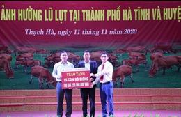 Agribank Hà Tĩnh II trao 35 con bò trị giá 525 triệu đồng cho bà con vùng lũ