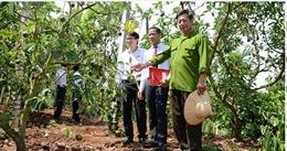 """Agribank tỉnh Đắk Lắk: khẳng định vai trò chủ đạo trong lĩnh vực đầu tư tín dụng phát triển """"tam nông """""""