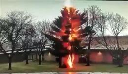 Xem sét đánh kinh hoàng, hạ gục cây giữa sân trường trong vài giây