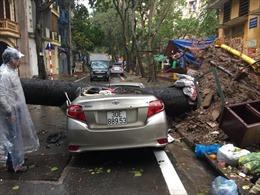 Hà Nội: Mưa lớn, cây đổ đè bẹp xe ô tô