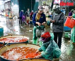 Giá cá chép tăng chóng mặt, tiểu thương chợ Yên Sở hết hàng từ sáng sớm