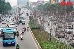 Cận cảnh dự án 262 cây phong lá đỏ kém hiệu quả trên đường Trần Duy Hưng-Nguyễn Chí Thanh