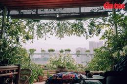 Ngắm 'rừng' hoa loa kèn trên sân thượng giữa lòng Hà Nội