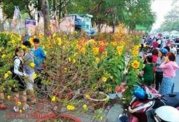 TP Hồ Chí Minh sẽ tổ chức 128 chợ hoa  trong dịp Tết Nguyên đán 2019