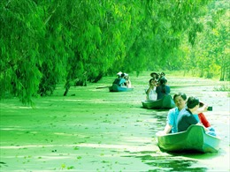 Màu xanh mê hoặc của rừng tràm Trà Sư mùa nước nổi