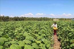 Xã đảo Long Hòa đạt chuẩn nông thôn mới đầu tiên ở Trà Vinh