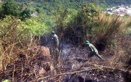 Cháy lớn suốt 2 ngày, thiêu rụi 6ha rừng đặc dụng Đèo Cả, Phú Yên