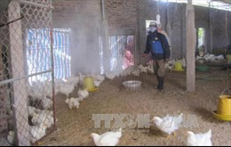 Lạng Sơn xuất hiện ổ dịch cúm gia cầm A/H5N6