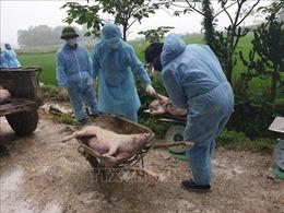 Lãnh đạo địa phương phải chịu trách nhiệm nếu xảy ra ô nhiễm môi trường do dịch tả lợn châu Phi