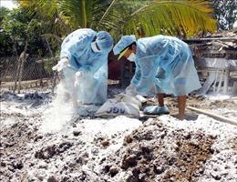 Bến Tre cấp bách phòng, chống bệnh dịch tả lợn châu Phi