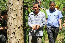 Thực nghiệm hiện trường vụ hủy hoại trên 10 ha rừng thông ở Lâm Đồng