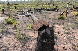 Điều tra vụ phá rừng tại huyện Đăk Hà (Kon Tum)