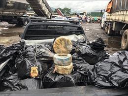Brazil thu giữ 5,2 tấn cần sa giấu trong xe tải