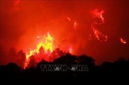 500 lính cứu hoả dập tắt cháy rừng dữ dội ở Pháp