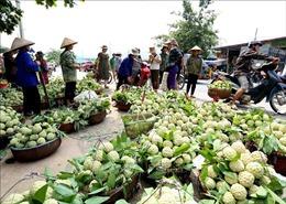 Tuần lễ quảng bá sản phẩm na Chi Lăng tại Hà Nội