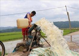 Nông dân Đắk Lắk chạy đua với thời gian cứu lúa bị ngập
