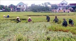 Mưa lớn khiến gần 2.000 ha lúa ở Hà Tĩnh bị ngập úng