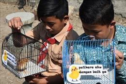 Dự án nuôi gà giúp trẻ 'cai nghiện' điện thoại thông minh
