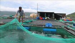 Nha Trang di dời hơn 15.400 người dân đến nơi tránh trú an toàn