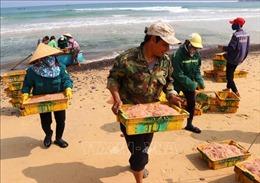 Ngư dân Quảng Ngãi trúng mùa ruốc biển