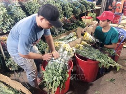 Hàng hóa về chợ đầu mối tại TP Hồ Chí Minh dồi dào cho dịp Tết