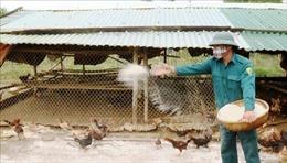 Các địa phương giám sát, phòng chống dịch bệnh cho đàn gia súc, gia cầm