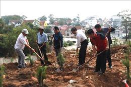 Lâm Đồng phát động trồng rừng, trồng cây