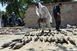 Afghanistan tiếp tục truy bắt 270 tù nhân vượt ngục