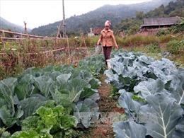 Cấp trên 2.900 tấn giống cây trồng cho các tỉnh miền Trung