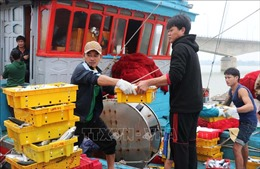 Ngư dân Quảng Trị được mùa biển