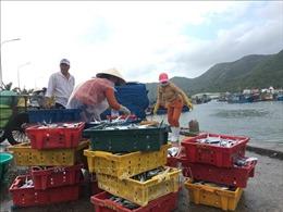 Sôi động cảng cá Vàm Láng những ngày đầu năm mới