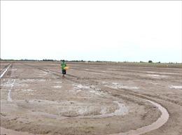 Nông dân vẫn xuống giống sớm vụ Hè Thu trong tình hình khô hạn