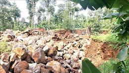 Ngang nhiên khai thác đá mồ côi giữa rốn rừng phòng hộ