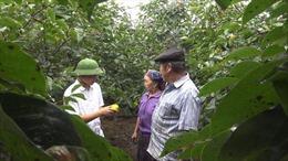 Thay đổi tư duy sản xuất nông nghiệp ở huyện vùng cao Mù Cang Chải