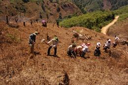 Ổn định đời sống dân di cư tự do tại Lâm Đồng