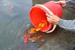 Thị trường ngày ông Công ông Táo: Giá cá chép giảm 'nhiệt' theo giờ, hoa tươi tăng mạnh
