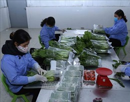 Trung Quốc không còn là thị trường 'dễtính' với nông sản Việt Nam