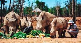 Gặp gỡ những tê giác con 'quốc tịch Việt' ở Vinpearl Safari